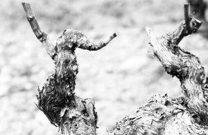 El club de los vinos en Catavinos